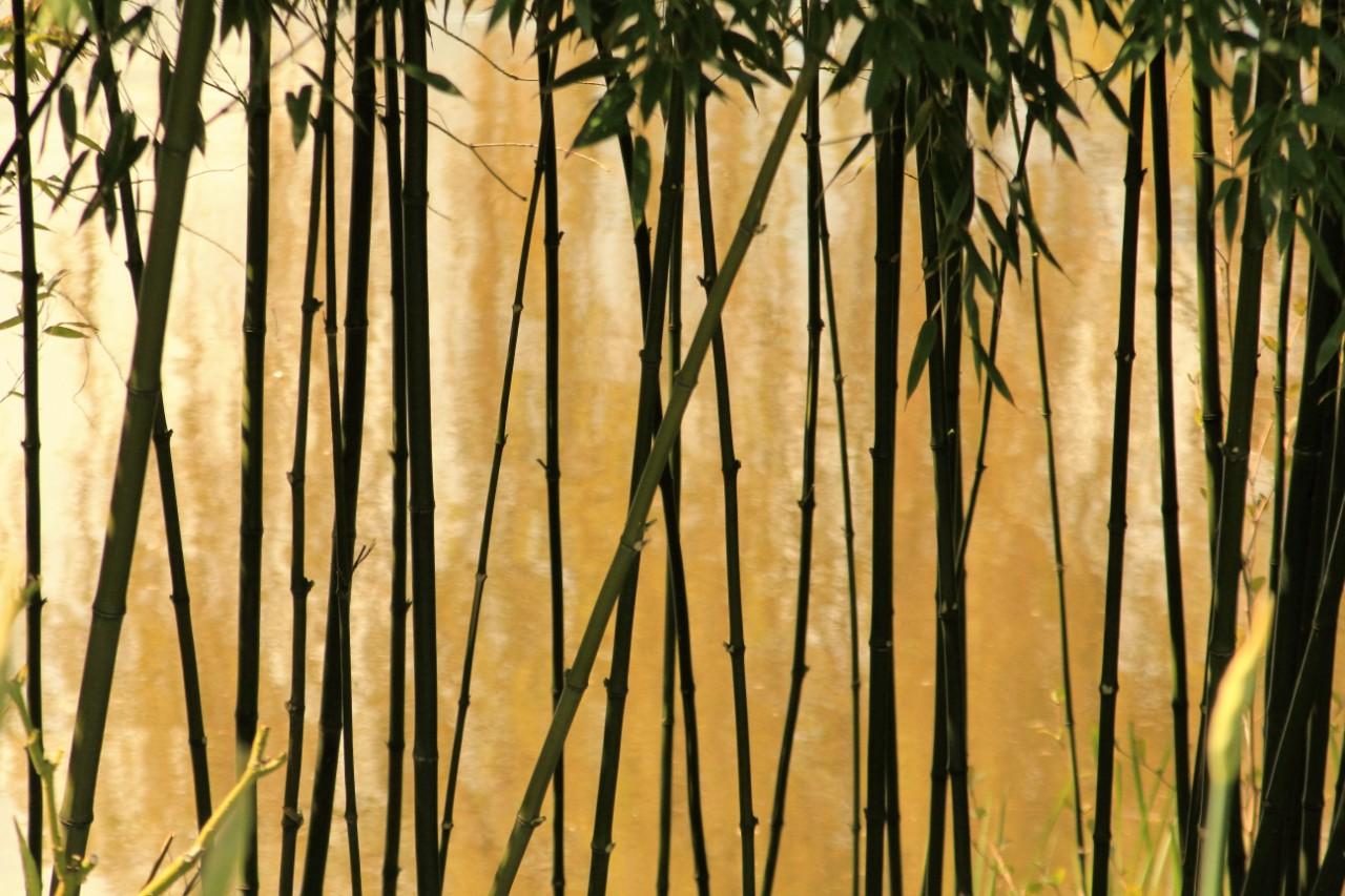 Hållbart mode av bearbetad bambu